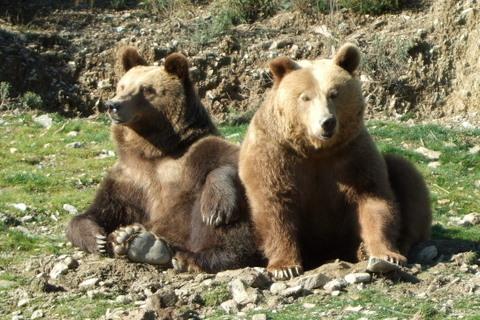 Bears an PeñaEscrita